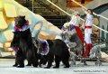 Дрессированный медведь Потап - заказ артиста